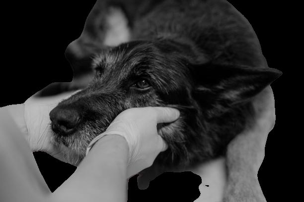 Усыпление домашних животных